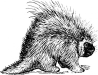 porcupine,rodent,black and white,animal,line art,mammal,media,clip art,externalsource,public domain,image,svg,wikimedia common,wikimedia common,wikimedia common,wikimedia common