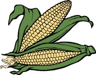 corn,vegetable,food,media,clip art,externalsource,public domain,image,svg
