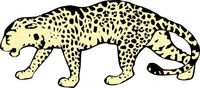 leopard,media,clip art,externalsource,public domain,image,png,svg,animal,mammal,cat