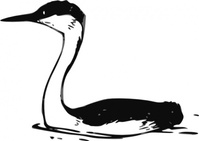 western,grebe,media,clip art,public domain,image,svg,fws,fws lineart,nature,animal,bird,line art,aechmophorus,occidentalis,aechmophorus occidentalis,waterbird