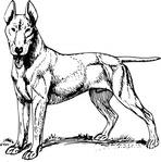 bull,terrier,animal,mammal,pet,dog,bull terrier,biology,zoology,line art,black and white,contour,outline,media,clip art,externalsource,public domain,image,png,svg,wikimedia common,psf,wikimedia common,wikimedia common,wikimedia common