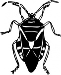 animal,insect,bug,media,clip art,externalsource,public domain,image,png,svg