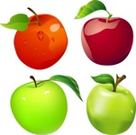 free,vector,apple