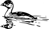 swimming,duck,clip art,remix,media,public domain,image,svg,fws,fws lineart,line art,bird,dabchick,devil,diver,dive,dapper,hell,water witch,pied,billed grebe,podilymbus podiceps,grebe,billed