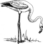 flamingo,black and white,line art,bird,media,clip art,externalsource,public domain,image,svg,wikimedia common,wikimedia common,wikimedia common,wikimedia common