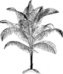 miniature,coconut,palm,plant,tree,media,clip art,externalsource,public domain,image,png,svg