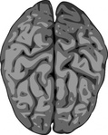 grey,brain,remix,clip art,media,public domain,image,png,svg