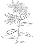 plant,flower,shrub,nature,wild,outline,coloring book