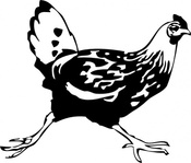 running,chicken,animal,bird,hen,media,clip art,externalsource,public domain,image,png,svg