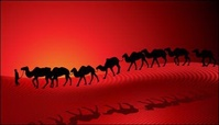 camel,desert,caravan,sunset,silhouette,background