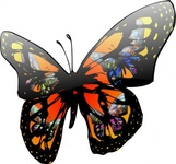 butterfly,lighting,effect,gloss,media,clip art,how i did it,public domain,image,png,svg