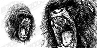ferocious,gorilla,material,animal,_animals,beast,chimpanzee,face,forest,jungle,mammal,monkey,wild,wildlife,zoo,animals,backgrounds & banners,buildings,celebrations & holidays,christmas,decorative & floral,design elements,fantasy,food,grunge & splatters,heraldry,free vector,icons,map,misc,mixed,music