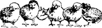 chick,animal,bird,chicken,black and white,media,clip art,externalsource,public domain,image,png,svg
