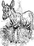 donkey,animal,old,media,clip art,externalsource,public domain,image,png,svg
