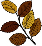 autumn,leaf,branch,remix,fall,tree,colour,plant,nature,clip art,media,public domain,image,png,svg