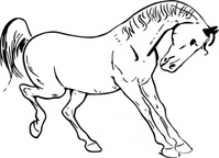 prancing,horse,outline,animal,mammal,coloring book,contour,black & white