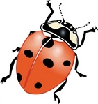 ladybug,bug,insect,country,summer,flower,nature,media,clip art,public domain,image,svg