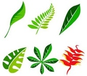 komodo,goodie,leaf,nature,package,leaf,freebie,media,leaf