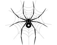 animal,spider,insect,net,spider web,web
