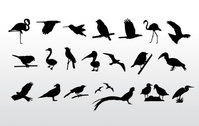birds collection,vector,silhouette,flamenco,eagle,falcon,hawk,stork,seagull,hummingbird,bird,sparrow,pelican