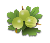 gooseberry,food,fruit,stachelbeere,früchte,plant,nature,biology,vegetable,green,farm,color,essen