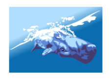 whale,wal,nature,ocean,animal,underwater,diving,cartoon