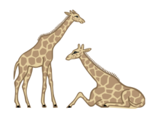 animal,giraffe,wild,africa,tall,fauna