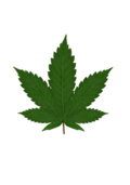 weed,cannabis,leaf,plant,vegetable,realistic