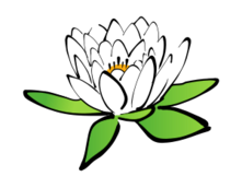 lotus,india,flower,symbol,transformation,india