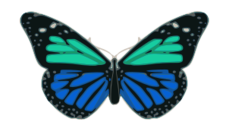animal,tier,animale,insect,bug,insecte,insekt,insetto,insetti,butterfly,papillon,schmetterling,farfalla,color,colour,couleur,farbe,colore,wing,aile,ala,ale,antenne,antenna,turquoise,blue,bleu,blau,turchese,blu