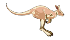 media,clip art,public domain,image,png,svg,animal,australian,kangaroo