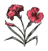 media,clip art,externalsource,public domain,image,png,svg,plant,flower,nature,colour,carnation