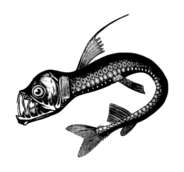 sea monster,real,deep sea,fish